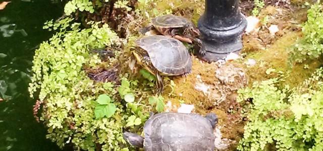 carmen-de-la-victoria-tortugas